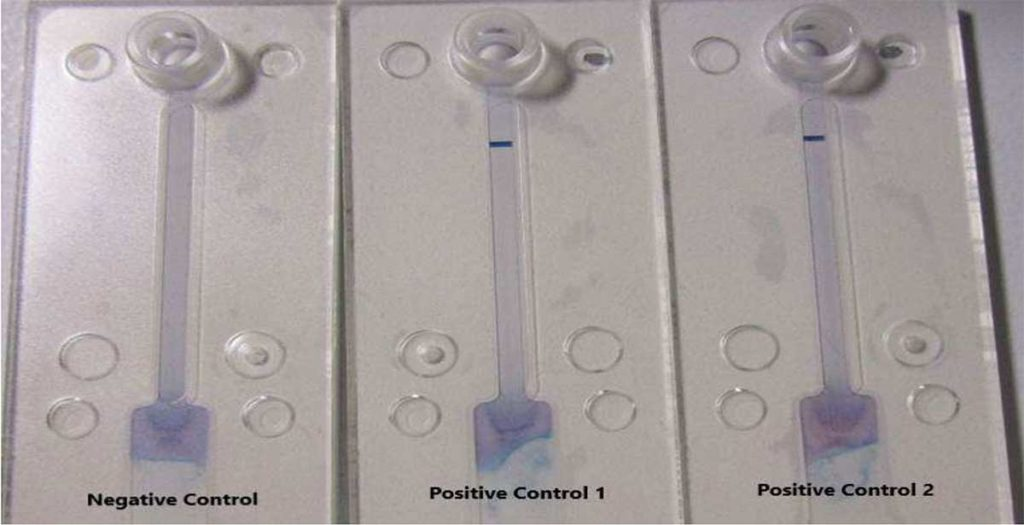 Positive Prototype Results